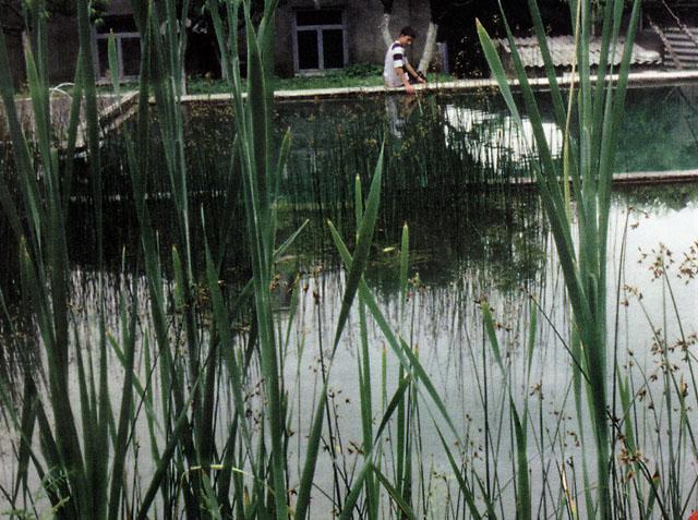 Рыбный пруд рядом с домом